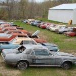 Huge Mustang Junk Yard for Sale 01