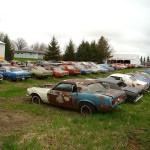 Huge Mustang Junk Yard for Sale 02